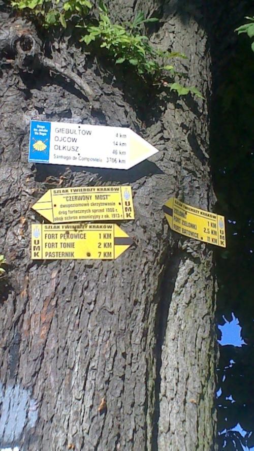 El árbol que indica el Camino de Santiago