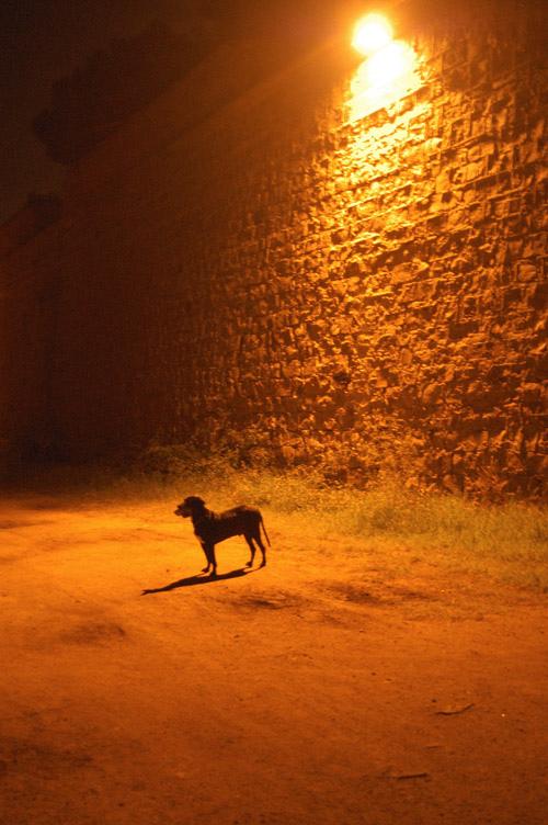 El pobre perro lo seguirá viendo todo en tonalidades grises